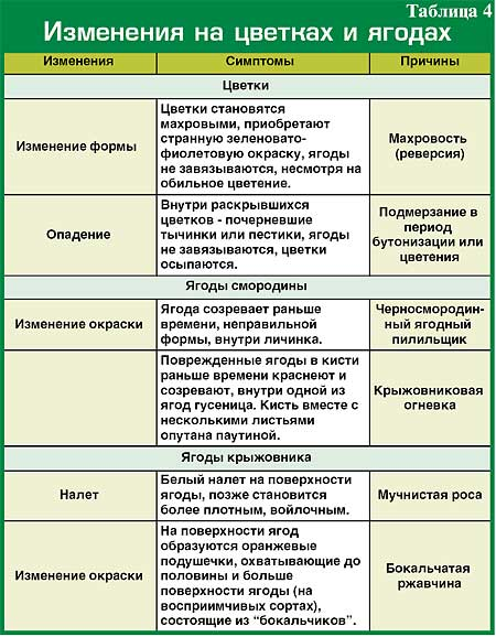 И болезни смородины и крыжовника